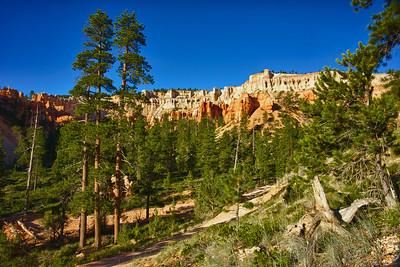 Pines Grow in Utah Canyon