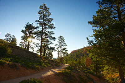 Light on Trail in Bryce Canyon