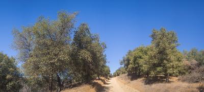 Dirt Road through California Woods