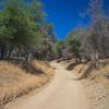 Sand Road Between Trees