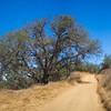 Hiking Trail through Wilderness