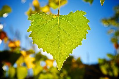 Leaf in Detail