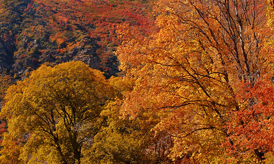 Fall, Big Cottonwood Canyon