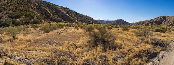 California Savanna Grassland