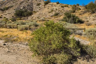 Desert Bush in Grassland Wilderness