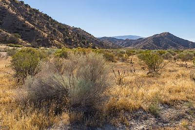 California Grassland Savanna Wilderness