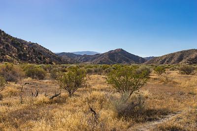 Brush in California Grasslands