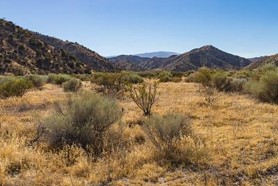 California Desert Grasslands