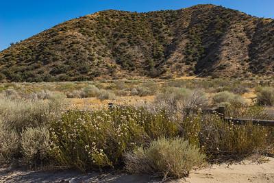 Brush in California Savanna