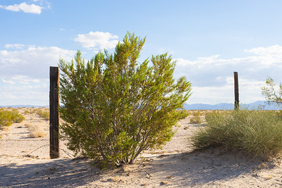 Bush and Fence Line in Mojave