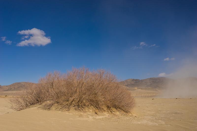 Single Bush in California Desert