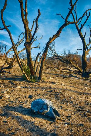 Skull Under Burned Tree