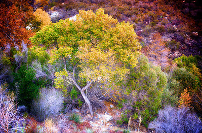 Colors of California Fall
