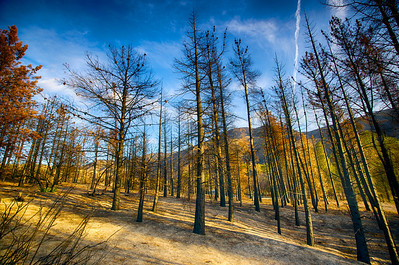Haunted Forest after Wildfire