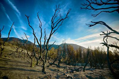 Hillside of Burned Trees
