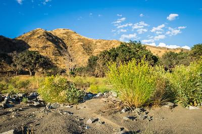Yellow Desert Flowers in California