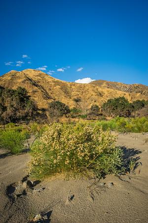 Bush Growing in Sandy Canyon