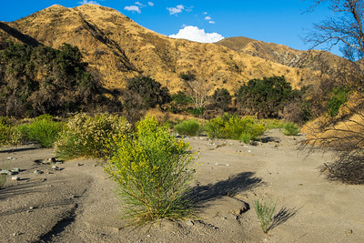 Dry Riverbed in California Canyon