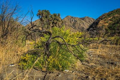 Dead Tree Flowering Bush