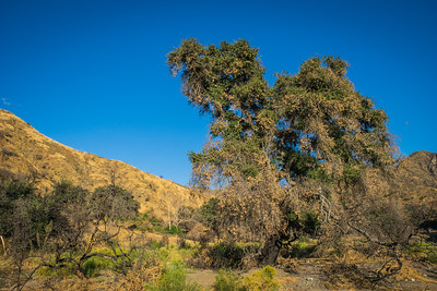 Southern California Wilderness Growth