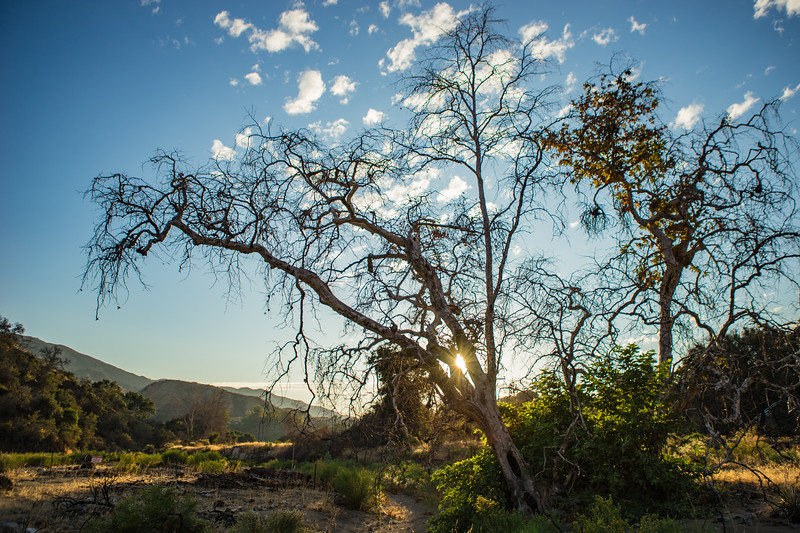 Leaning Tree in California Wilderness
