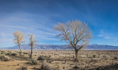 Wilderness Mojave Desert California