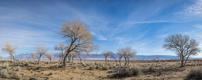 Panorama of Mojave Desert