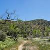 Panorama of Walking Trail in California
