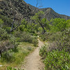 Southern California Valley Walking Trail