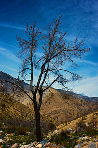 Charred Tree in Wilderness