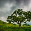 Full Tree Under Dark Clouds