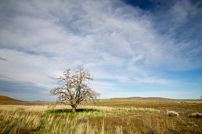 One tree survives on the open plain, waiting for its day to be overwhelmed by the desolation.