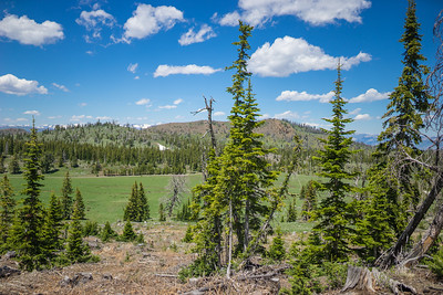 Wyoming Pine Forest