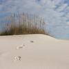 """Footprints"" #06"