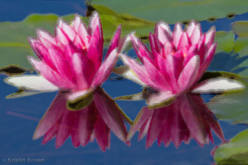 Stylized Waterlillies