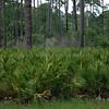 Favor Dykes State Park<br /> <br /> St Augustine,  Florida