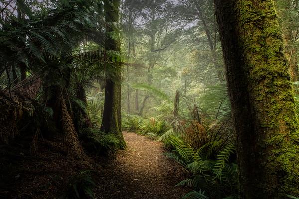 (Image#3431) Melba Gully, Victoria, Australia