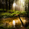 (Image#3310) Beech Forest, Victoria, Australia