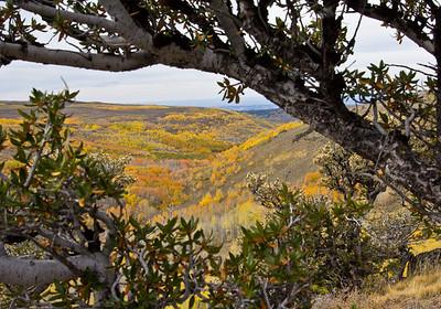 Fall Aspen View Steens Mountain Loop in Oregon