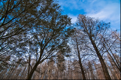 Trees at 15mm-- Taken while sitting in my car
