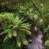(3046) Beech Forest, Victoria, Australia