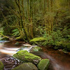 (2460) Nelson Falls, Tasmania, Australia