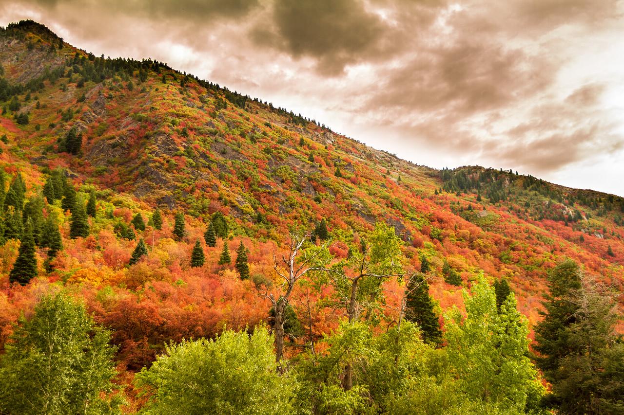 Fall Color Storm
