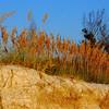 Fort Desoto Park<br /> <br /> October 2010