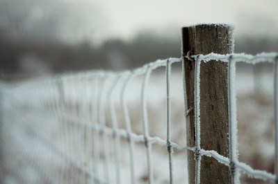 Hoarfrost and Fencepost | Hope, MN