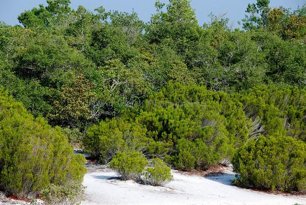Marion Scrub Area<br /> <br /> Polk county, Florida