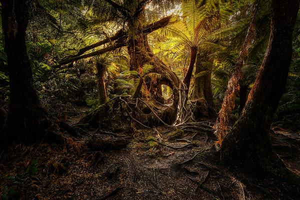 (2132) Maits Rest, Victoria, Australia