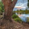 (2450) New Norfolk, Tasmania, Australia