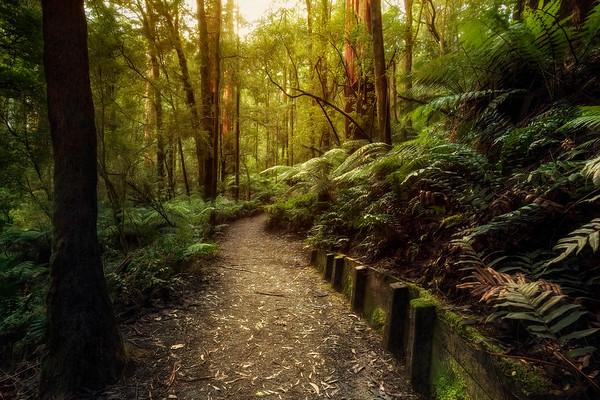 (2668) Triplet Falls, Victoria, Australia