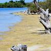 Simple beauty at Merritt Island National Wildlife Refuge.